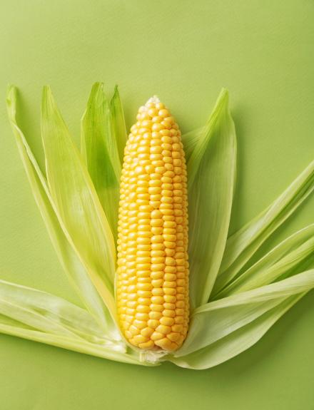 Seis tipos distintos de maíz