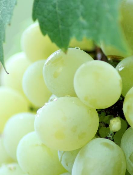 El origen de las 12 uvas