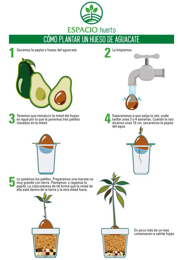 Cómo-plantar-Aguacate-Espacio